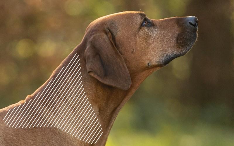 Myofasziale Schmerzen am Kopf beim Hund mit dem NOVAFON behandeln