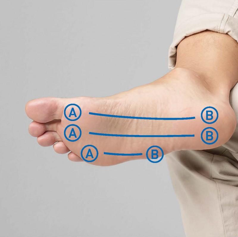Sehnenplatte, Fußmuskulatur, Fußsohle