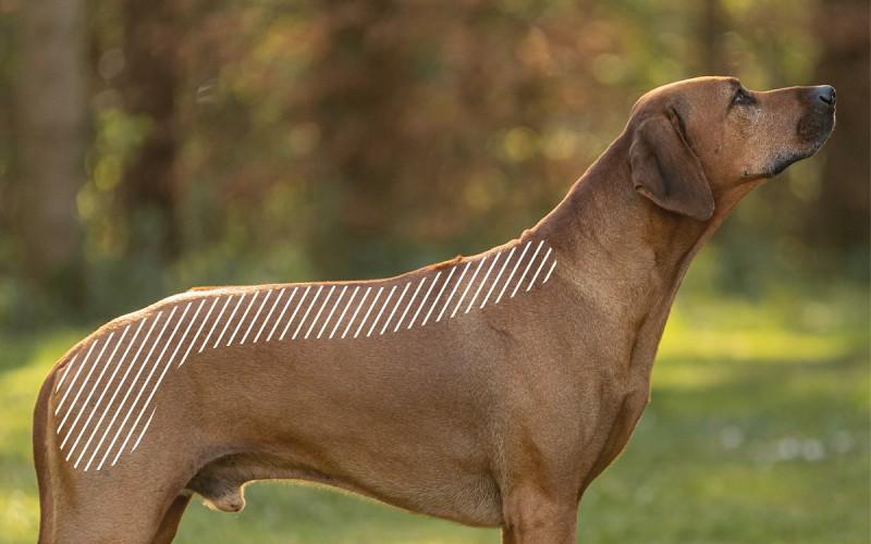 Myofasziale Schmerzen am Rücken beim Hund mit dem NOVAFON behandeln