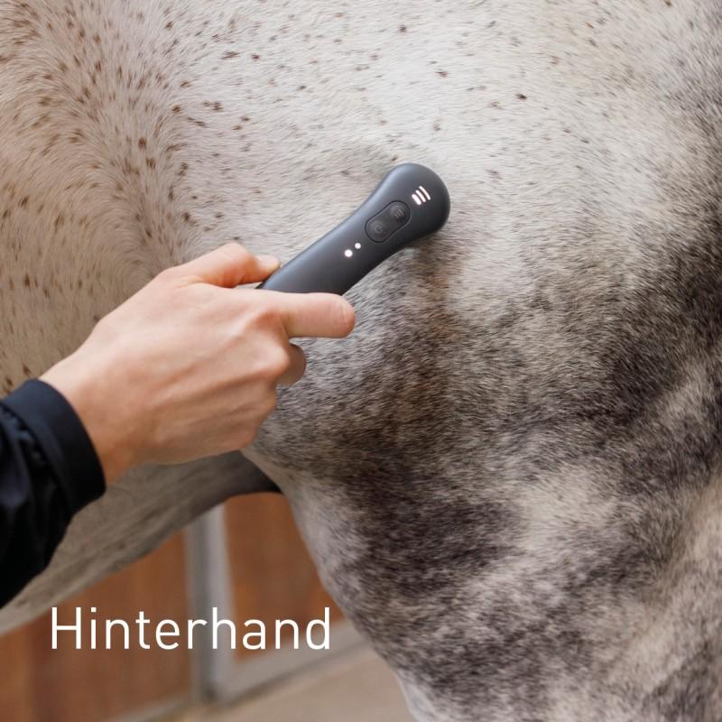 Hinterhand beim Pferd behandeln mit NOVAFON