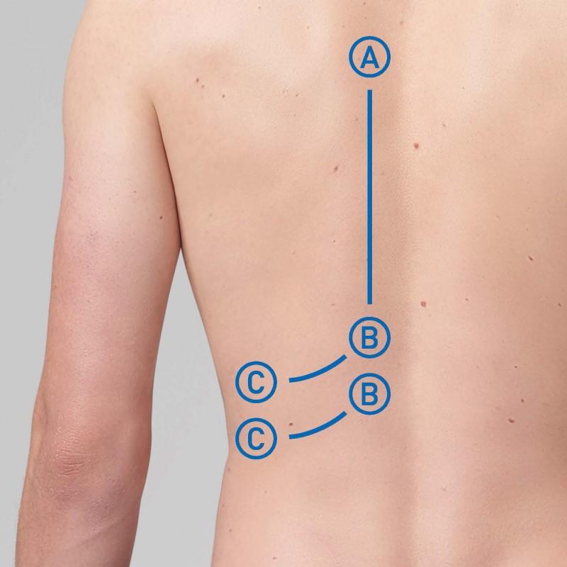 Brustkorb, unterer Rücken, BWS