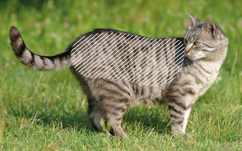 Muskelverspannungen bei Katzen mit dem NOVAFON behandeln