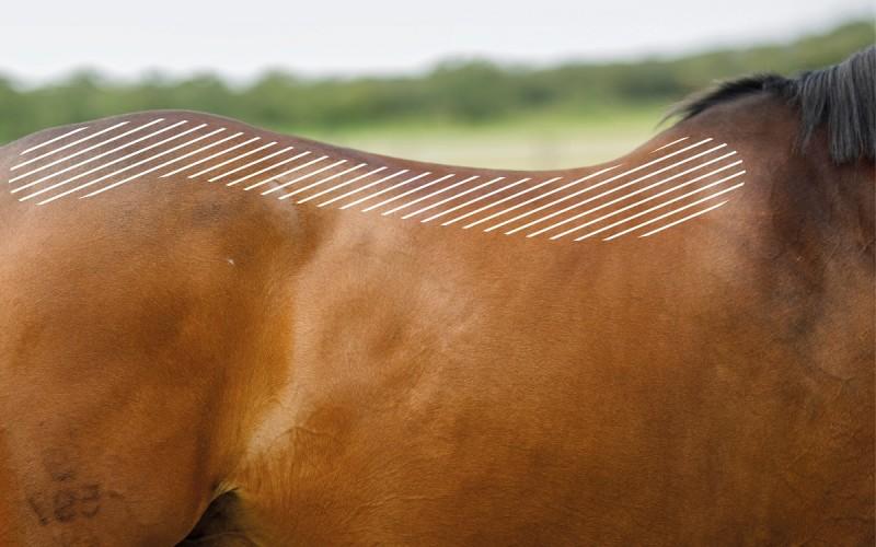 Kissing Spines beim Pferd mit dem NOVAFON behandeln