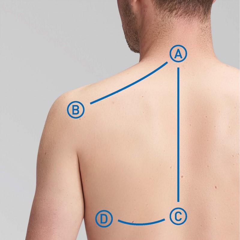 Oberer Rücken, Brustwirbelsäule, Rippen