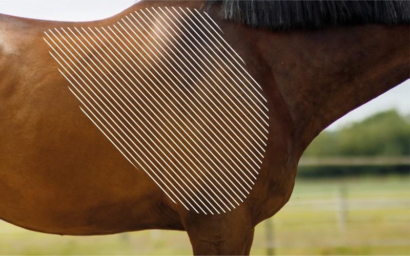 Myofasziale Schmerzen an der Schulter beim Pferd mit dem NOVAFON behandeln