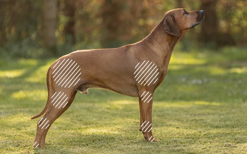 Arthrose beim Hund mit dem NOVAFON behandeln